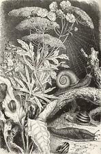 Naturlehre. Marshall, William. Bilder-Atlas zur Zoologie der Niederen Tiere 1913