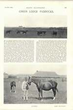 1896 Horse Race Green Lodge Paddocks Napoli Palm Flower Springfield