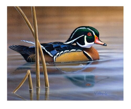 """10 /""""Nature/'s Palette/"""" Woodduck 14x10 Canvas Print by Robert Metropulos"""