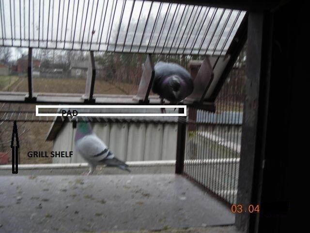 Belgian pigeons sputnik,Trap for Racing Pigeons   Tumblers   Fantails 60 cm