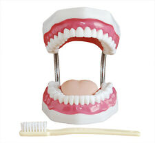 Giant Dental Care Tooth Model with Giant Toothbrush