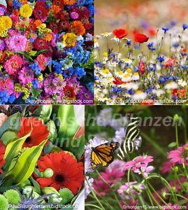 Blumen-Wiesen-Mischung-1000-Samen-Blumenteppich-kein-Gras-essbare-Blumen