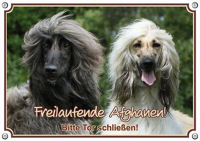 Aufstrebend Hundeschild - Afghanische Windhunde - Haltbares Metallschild In 1a Qualität Spezieller Sommer Sale