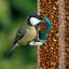 thumbnail 3 - SQUAWK Whole Peanuts - Fresh Premium Wild Garden Bird Seed Food Nut Energy Feed
