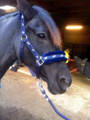 Nouveau cheval imprimé fourrure rembourré HEADCOLLARS dos nu matching plomb bleu marine s//n en promotion
