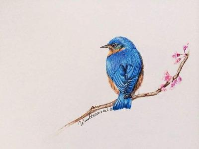 the_bluebird2020