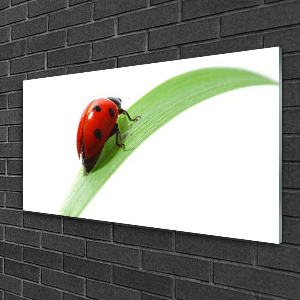 Glass print Wall art 100x50 Image Picture Ladybird Beetle Nature