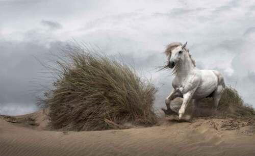 Tiere Vlies Fototapeten Tapeten AN-WM