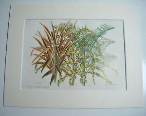 Antique c1880 Chromolithograph Botanical Floral Print ~ FOLIAGE PLANTS / FERNS