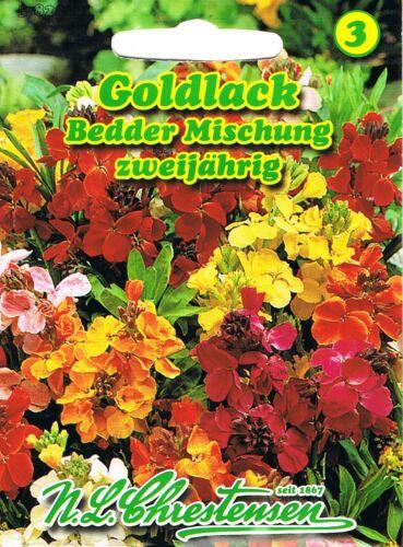 Goldlack /'Bedder Mischung/' niedrig zweijährig Cheiranthus cheiri 582201 Saatgut