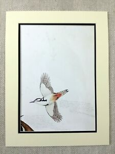 Bird-Print-Woodpecker-Exotic-Animals-Contemporary-American-Art-Walton-Ford