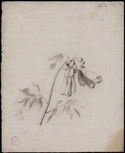 Dessin Crayon Et Fusain 19°.j.g. (just Gautier) Etude Fleurs. Dsa108 Blanc De Jade