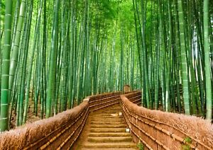 A3-Awesome-Bamboo-Forest-Poster-Size-A3-Tropical-Japan-Poster-Gift-14168