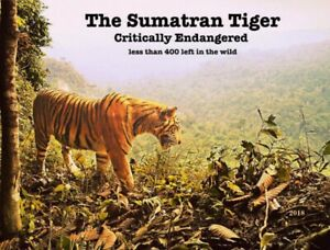 "The Sumatran Tiger an Endangered Species card by ""PostcardsTo SaveThePlanet"""