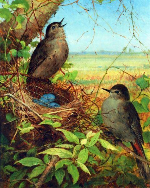 """ Thrushes 'nid "" Par Fidelia Bridges. Toile Oiseau Art. 11x14"