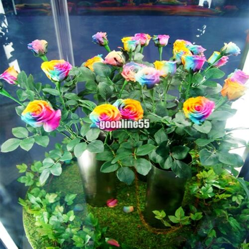 500 PCS Multi-color Rare Rainbow Rose Flower Seeds Garden Plants Valentine Hot //
