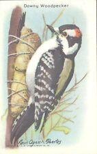 Church & Dwight - Useful Birds of America, 9th Series - 7 - Downy Woodpecker