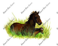 Banker Ponies Wild Island Horses Mother Baby Kindle Acer Vinyl Decal Sticker Art