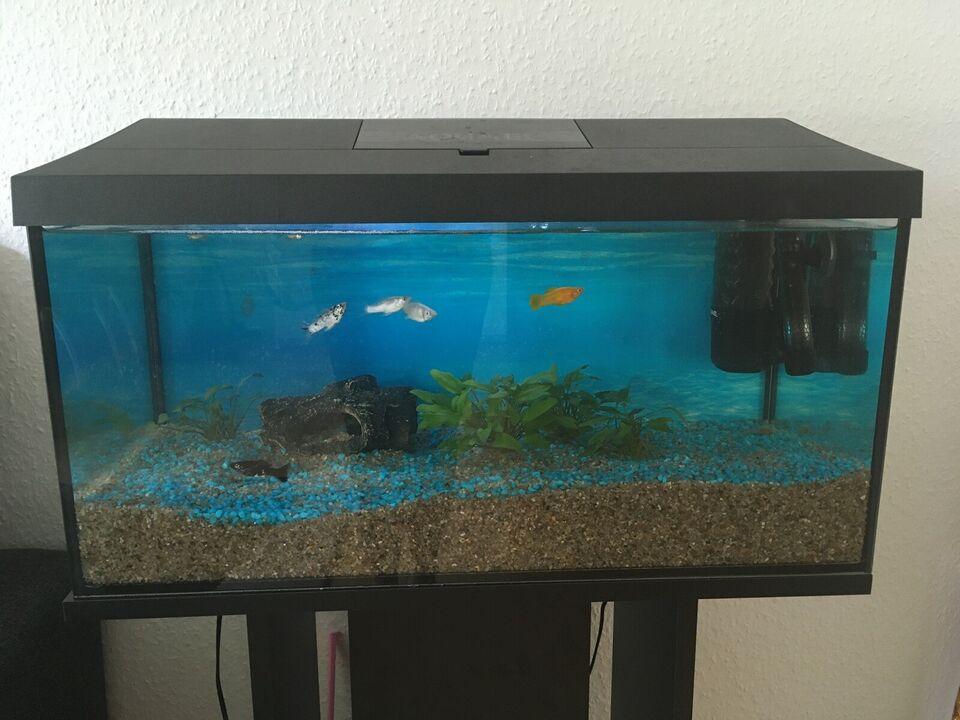 Akvarium, 54 liter, b: 60 d: 30 h: 35