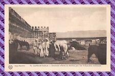 CPA MAROC - CASBAH-TADLA - chevaux offerts au sultan par les tribus des alentour