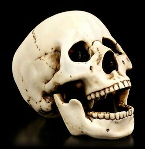 Skull-With-Movable-Lower-Jaw-Homo-Sapiens-Decor-Gothic