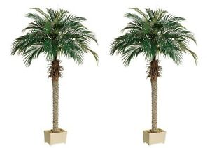 Image Is Loading 2 Artificial 70 034 Phoenix Palm Tree With