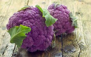 Chou Fleur Violet De Sicile 100 Graines Non Ogm Ebay
