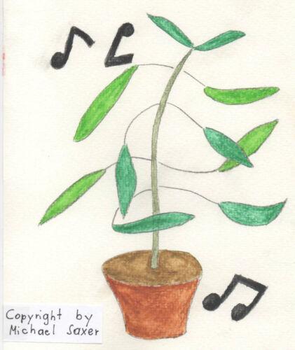 Zimmerblume immergrün farbenfroh ganzjährige exotische Samen TANZPFLANZE