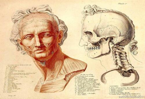 Jean Galbert Savage #1 Scientific Anatomy Reproduction  Print on A4 Canvas Paper