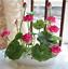 thumbnail 4 - 10Pcs Lotus Flower Seeds Rare 6 Kind Water Plant Bonsai Hydroponic Garden