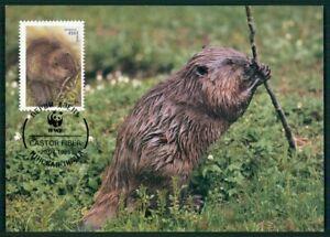 Utile Le Belarus Mk 1995 Faune Animaux Animals Castor Beaver Castor Maximum Carte Mc Cm En15