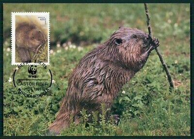 Belarus Mk 1995 Fauna Tiere Animals Biber Beaver Castor Maximumkarte Mc Cm En15 Warm Und Winddicht