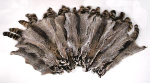 5800 Canadian Raccoon Skins pelts (per scavatori)canadese procione pelli