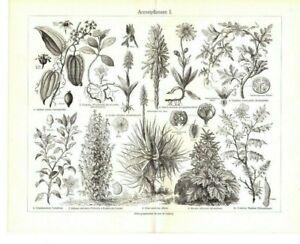 Holzstiche-Arzneipflanzen-Original-1906-Bild-Tafel-Aloe-Arnica-Baldrian-Crocus