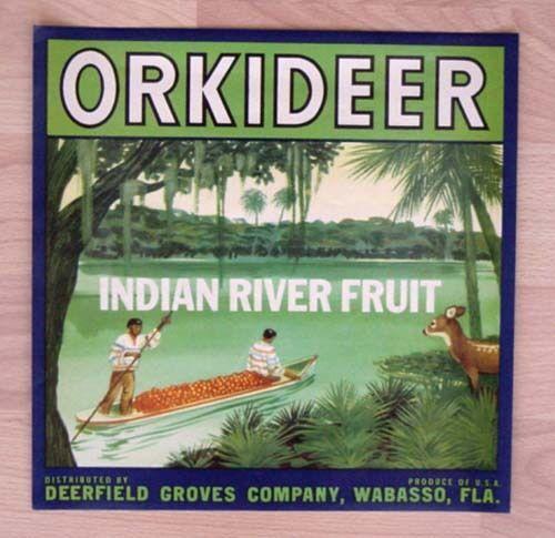 Flora shine Citrus CRATE LABEL FLORIDA STRIP Orlando 1930s ORIGINAL Vtg scarce