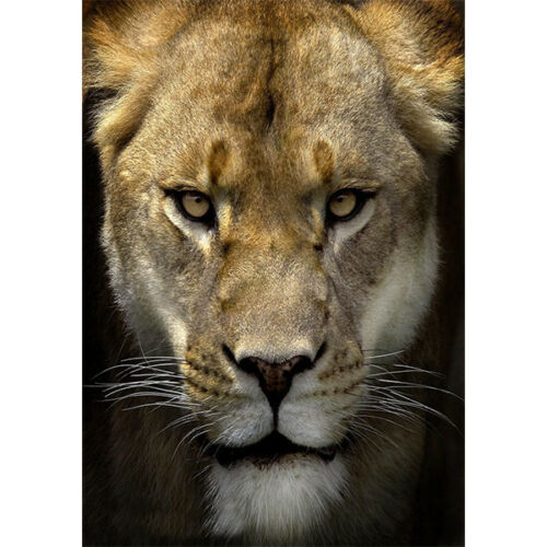 """Welcome Lion Wild Animal Large Garden Flag Yard Banner Decor Double Sided 28X40/"""""""