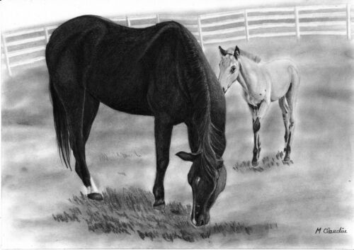 Pet pencil drawing from your photo A4
