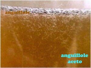 Actif Inoculo / Starter Allevamento Di Anguillole Dell'aceto, Mangime Vivo Per Pesci