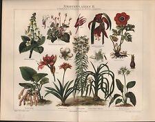 Chromo-Lithografie 1897: ZIMMERPFLANZEN II. Achimenes amabilis Gesnera bulbusa