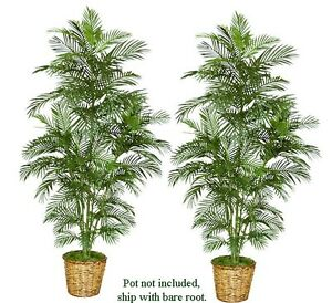 Two 7 Areca Artificial Palm Trees Silk Plants New 117 Ebay