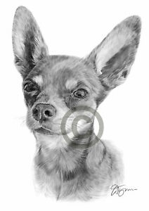 BLACK CAT art pencil drawing print A4 A3 signed by artist Pet Portrait