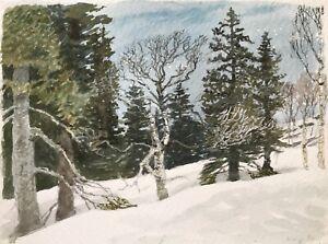 Karl-adser-1912-1995-ingresando-en-noruega-bosque-arboles-Escandinavia