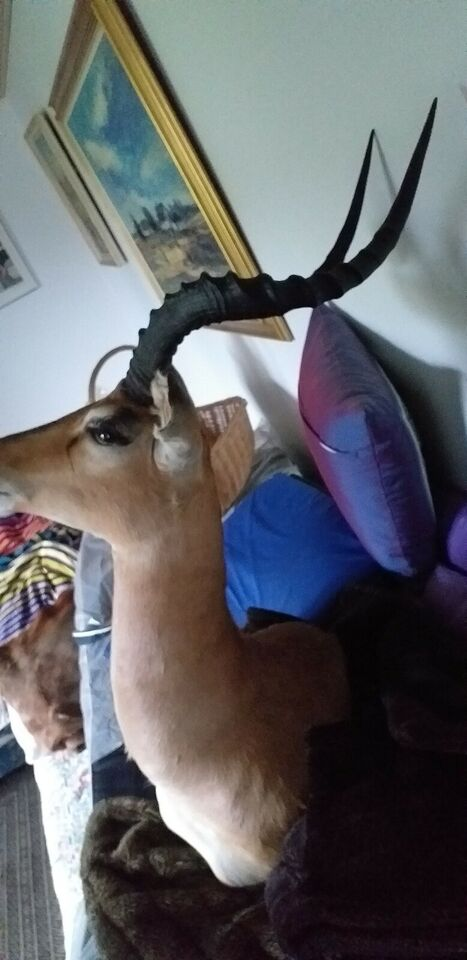 Udstoppede dyr, Blæsbuk og impala