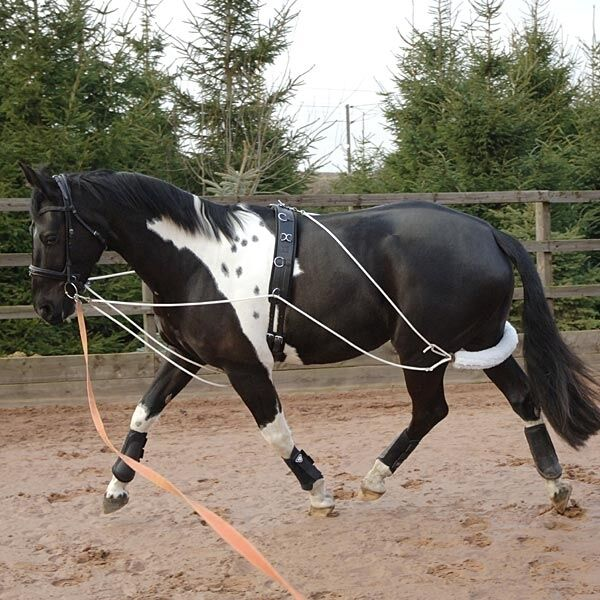 Fieldhouse Cavallo e Pony FormazioneistruzioneAffondo Aiuto