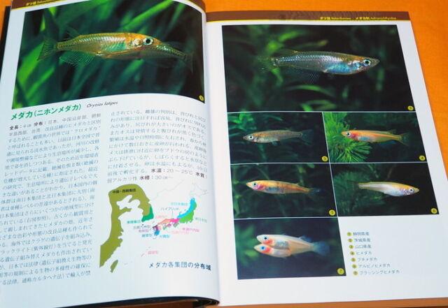 MEDAKA & KILLIFISH & LIVEBEARERS Guide Book from Japan Japanese rice fish #1040