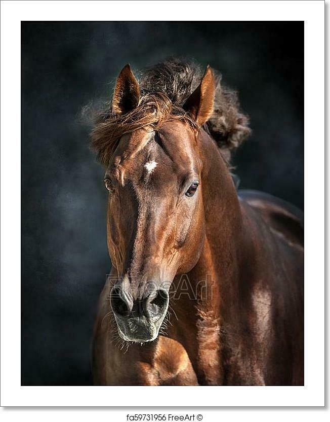 Horse Portrait Isolated Art Print Home Decor Wall Art Poster