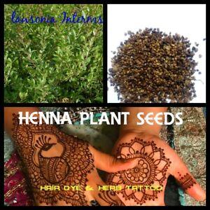Henna Plant Seeds Lawsonia Inermis Herb Tattoo Natural Hair Dye