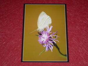 Photography-Chasseur-D-039-Images-Guy-Catez-1947-2016-Butterfly-amp-Flowers