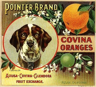 Covina German Pointer Dog #1 Orange Citrus Fruit Crate Label Art Print