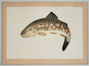 Larry-Sanford-JUMPING-BROWN-TROUT-Vintage-Fish-Lithograph-drymounted-matte-18x25